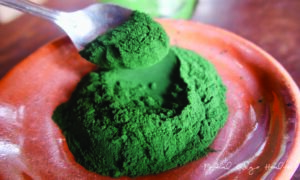 chlorella spirulina powder feat image