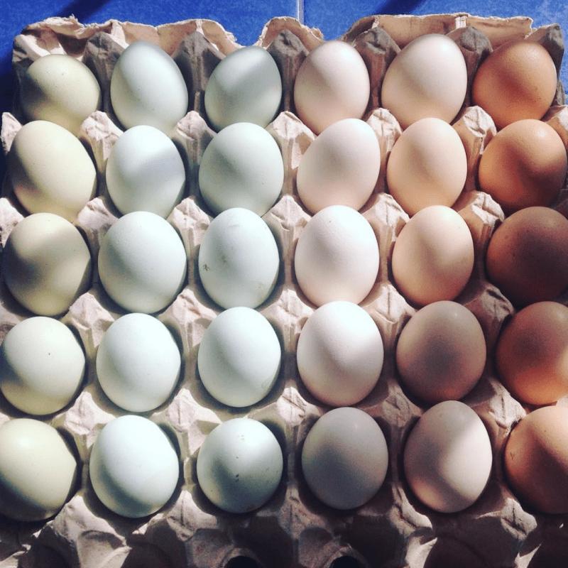 rainbow eggs in shell