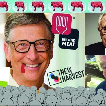 Lab grown meat