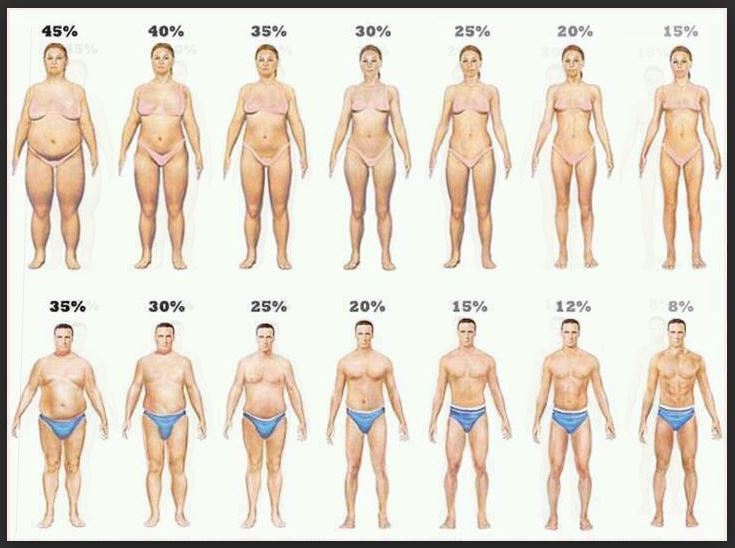 macros for a ketogenic diet fat percent chart