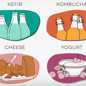 Starter Cultures (Yogurt, Cheese, Kefir, Kombucha)